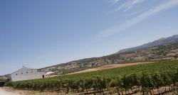 Imagen 10 de Bodega Morosanto, siguiendo en camino de Íberos, Romanos y Musulmanes.