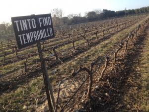 Imagen del reportajeLa Planta, la base de los vinos de Bodegas Arzuaga