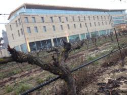 Imagen 9 de La Planta, la base de los vinos de Bodegas Arzuaga