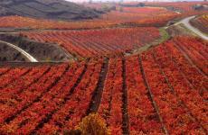 Imagen del reportajeEl otoño llena los viñedos de matices multicolor