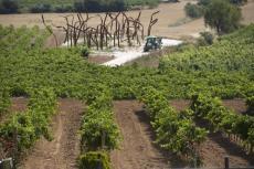 Imagen del reportajeSomontano, tierra de vinos y sorpresas