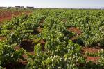 Imagen del reportajeVinos que te sorprenderán, y son de Extremadura. Bodegas Carlos Plaza